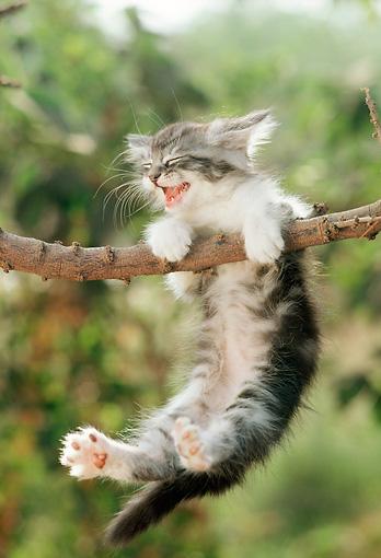 Cat-hanging