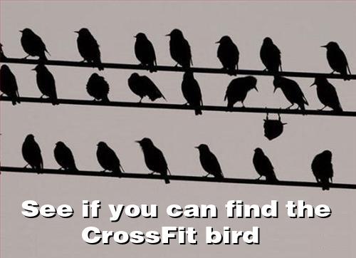 crossfit-bird